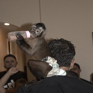 photo-picture-image-exotic-petting-animal-rental-farm-hire-party-6
